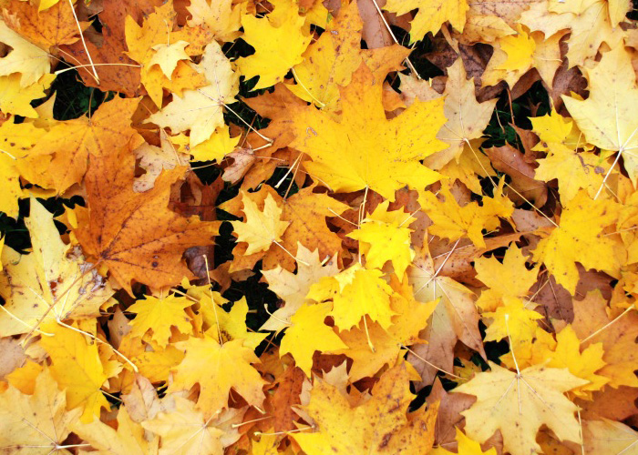 les_feuilles_mortes